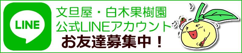 文旦屋・白木果樹園公式LINEアカウントお友達募集中!