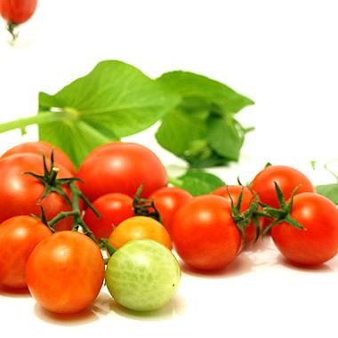 麻岡まるちゃんちのトマト