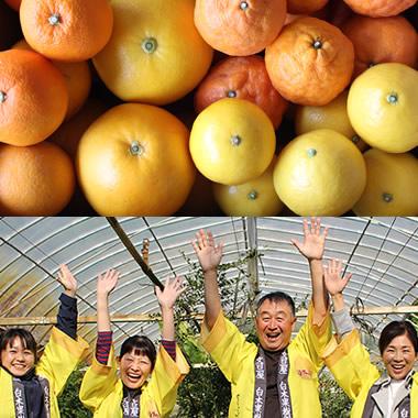 おうち応援柑橘セット