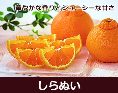 果汁たっぷり!ジューシーでなめらかな食感。高知県産【しらぬい】