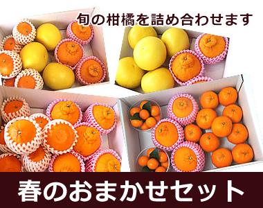 いろいろ食べたい欲張りな柑橘ファンにオススメです。【春のおまかせセット】