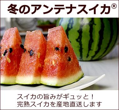 スイカの旨みが凝縮されたお味【春のアンテナスイカ】