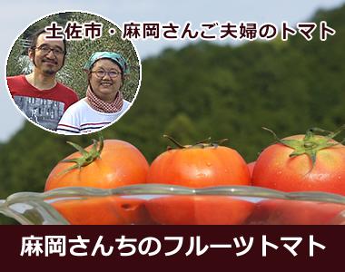 土佐市のトマト農家【麻岡さん・まりちゃんのフルーツトマト】