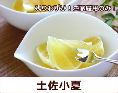 高知の初夏を代表する幸せ色の柑橘。甘酸っぱい果汁がたっぷり!【土佐小夏】