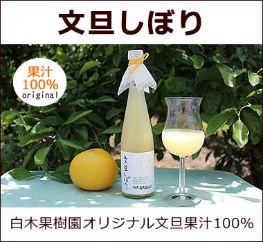 白木果樹園オリジナル。文旦果汁100%無添加ジュース。贅沢に丸搾り、そのままの美味しさ【文旦しぼり】