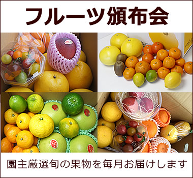園主選りすぐりの果物を毎月お届けします【フルーツ頒布会】
