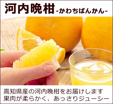 高知県産の河内晩柑を数量限定でお届けします。果肉が柔らかく、あっさりジューシー【河内晩柑(かわちばんかん)】