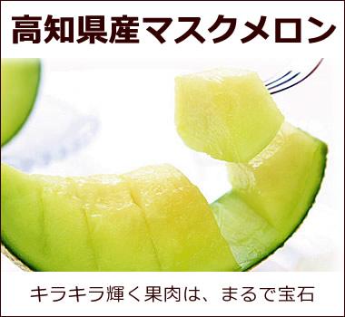 食べ頃を見極めてさらに美味しく!【高知県産マスクメロン】