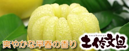 爽やかな早春の香り【土佐文旦】