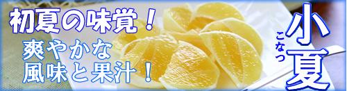 爽やかな初夏の味覚【土佐小夏】