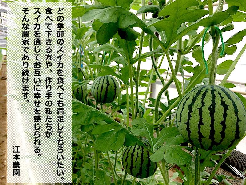 http://buntan.com/emotonouen/antenasuika/2016antenasuika06.jpg