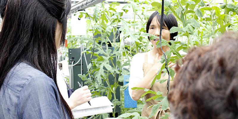 取材を受ける江本農園の奥さん