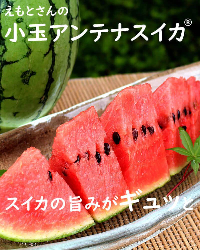 江本さんの小玉アンテナスイカ(夏)
