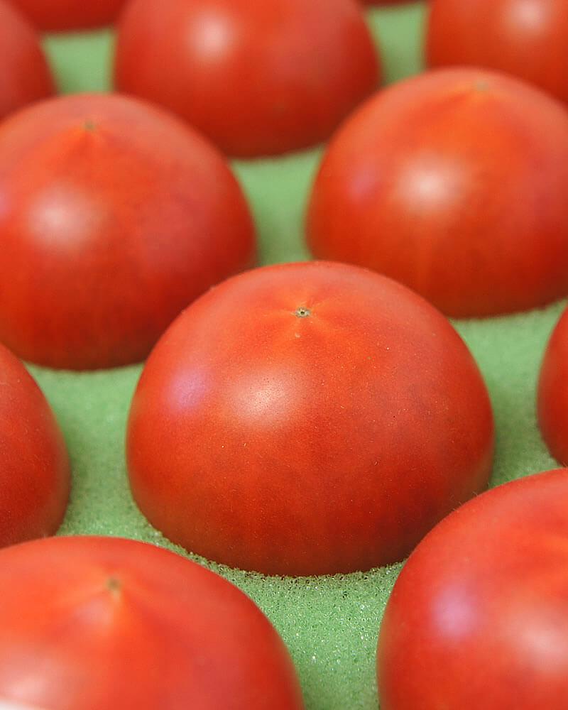 たくさんの美味しそうなトマト