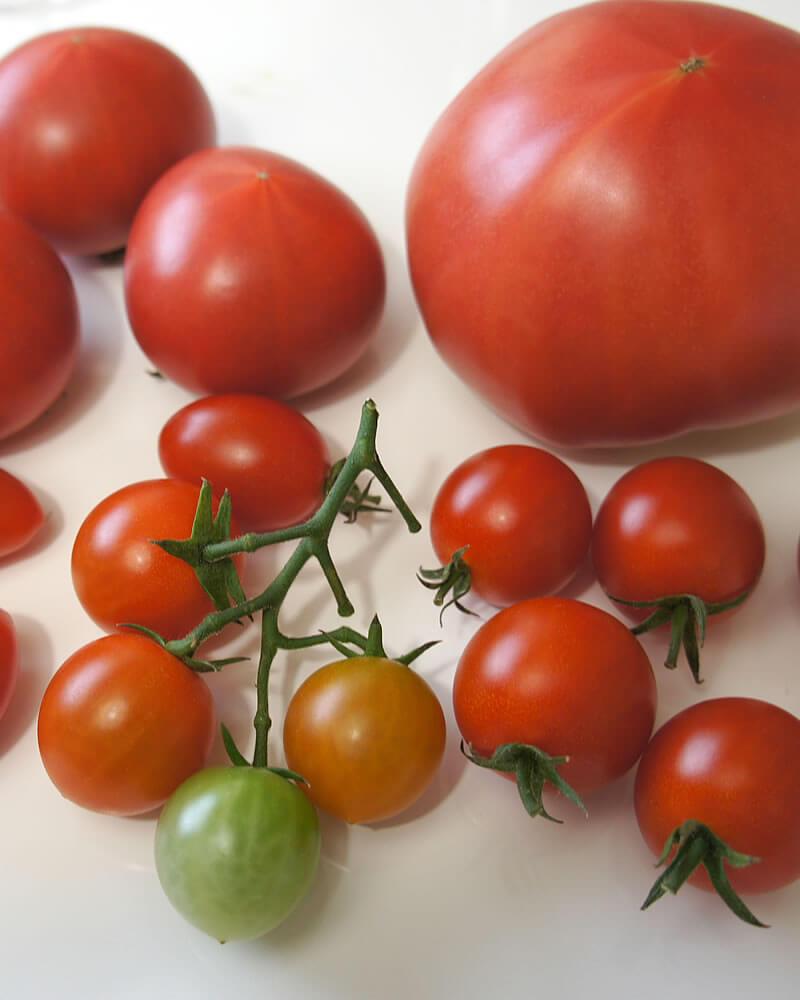 美味しそうなカラフルトマトとミニトマト