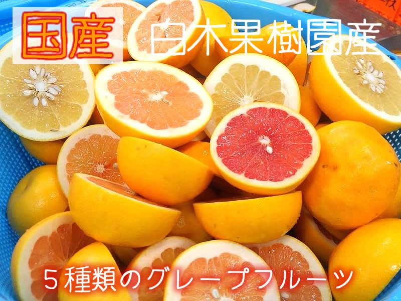 白木果樹園の5種のグレープフルーツ