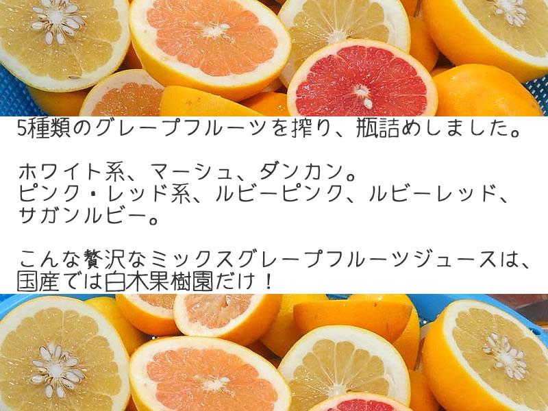 5種の国産グレープフルーツを搾った贅沢なジュースは白木果樹園だけ!