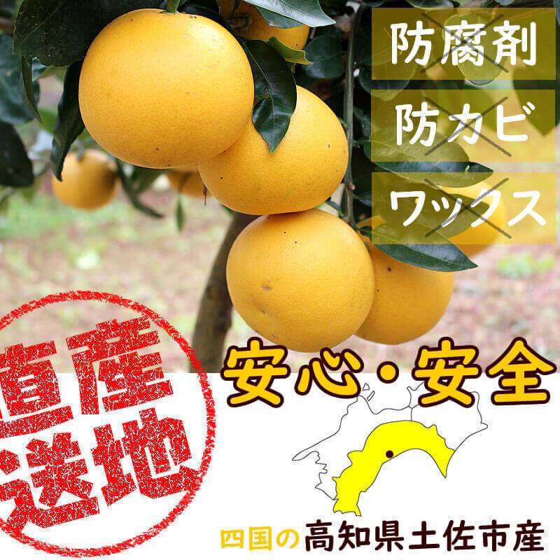 防腐剤ワックス不使用で安心安全の国産グレープフルーツ