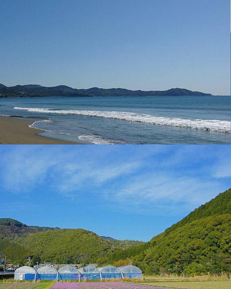 黒潮の海岸と自然