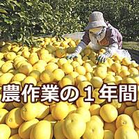 農作業の1年