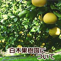 白木果樹園の特徴