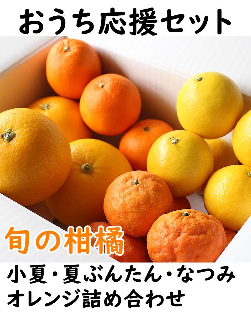 柑橘詰め合わせおうち応援セット