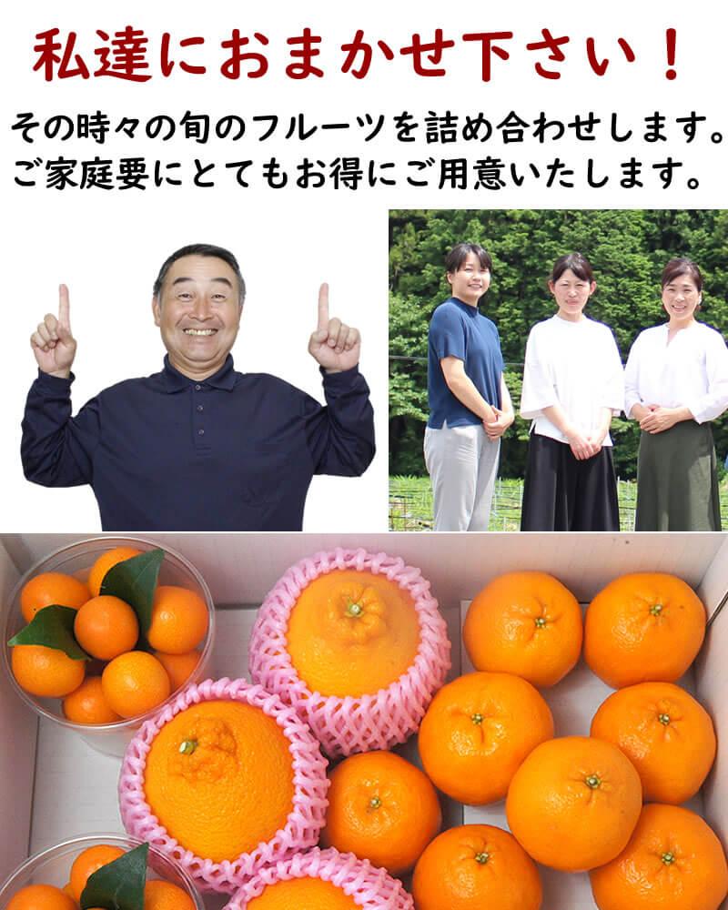 柑橘中心にフルーツ詰め合わせ