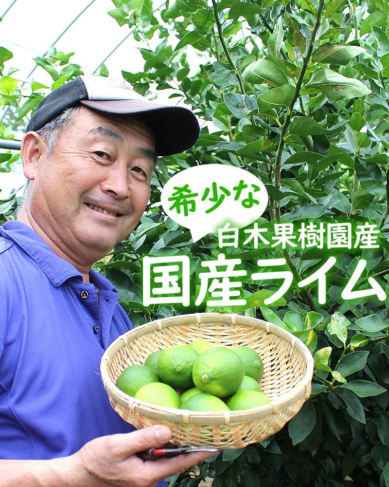 白木果樹園産の希少な国産ライム