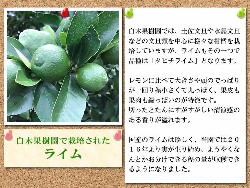 白木果樹園の国産ライム