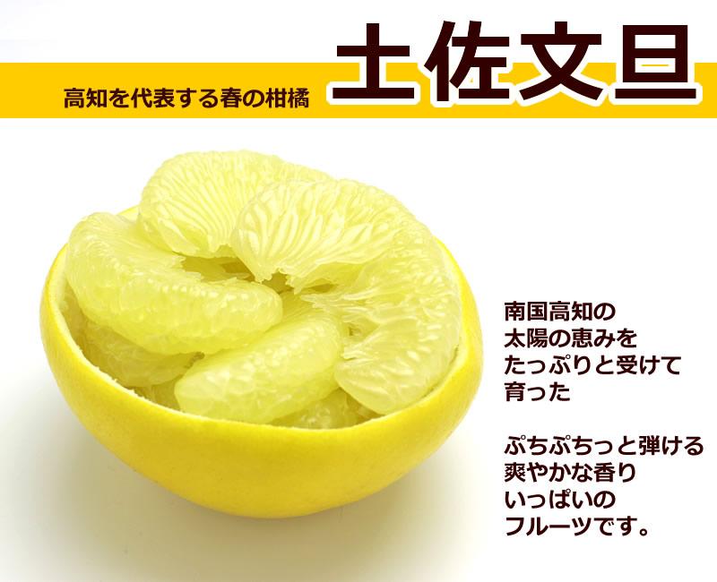 土佐文旦は、南国高知の太陽の恵みをたっぷりと受けて育った、爽やかな香りいっぱいの高知を代表する春の柑橘です