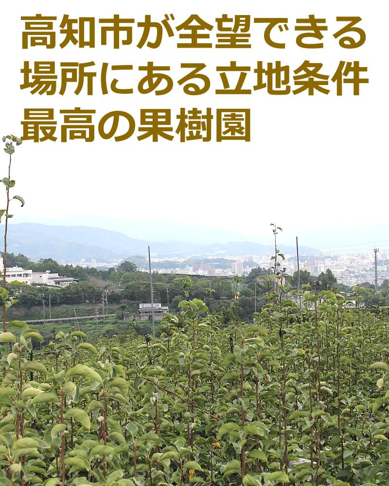 高知市が羨望できる果樹園