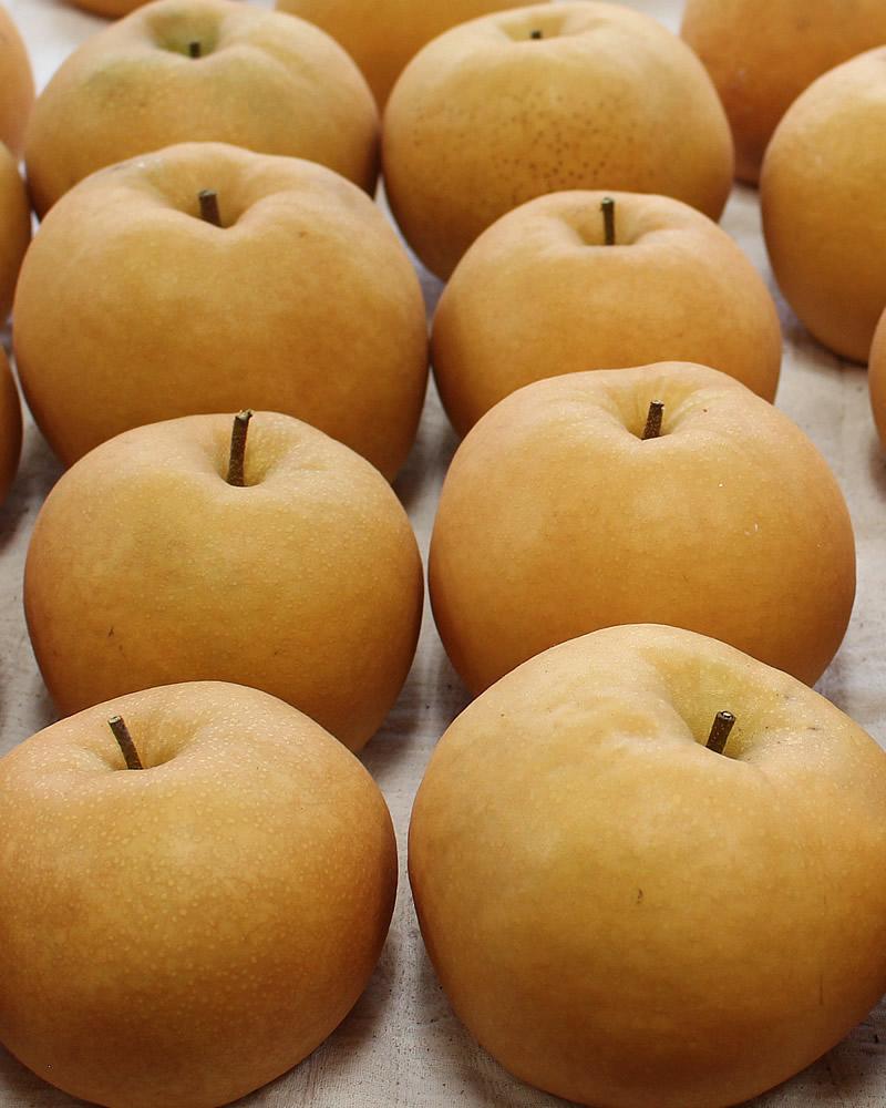 大きな梨の数々