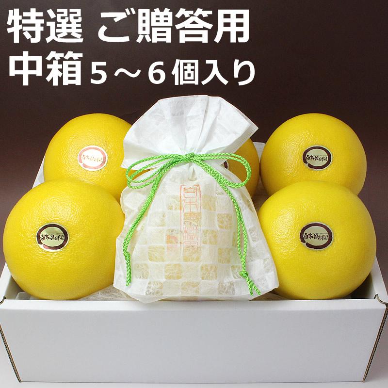 高知県産温室土佐文旦 ご贈答用 中箱 5~6個入り
