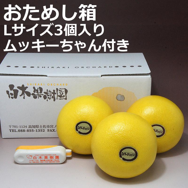 高知県産温室土佐文旦 3個入りおためし箱(ムッキーちゃん付き)