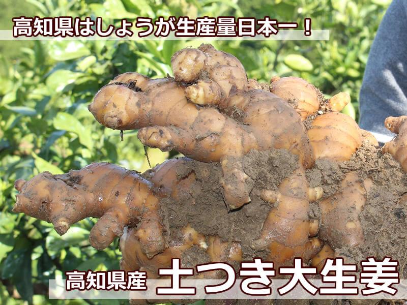 高知県はしょうがの生産量日本一!