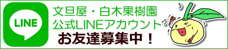 文旦屋・白木果樹園LINE公式アカウントお友達大募集!
