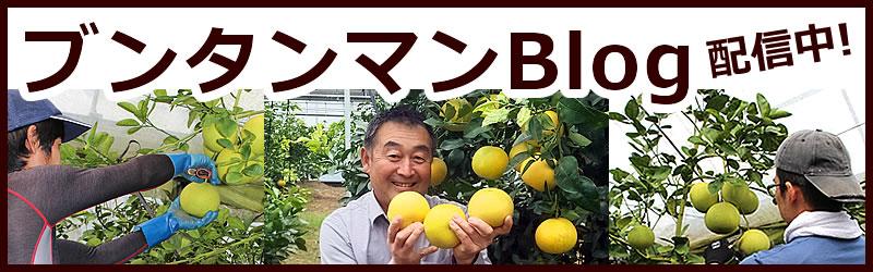 ぶんたん山や農作業の様子、文旦農家の裏側、珍しい柑橘などなど発信中!ブンタンマンBLOG