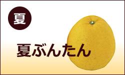 4月中旬から6月下旬頃までが旬の【夏ぶんたん(河内晩柑・みしょう柑・宇和ゴールド】