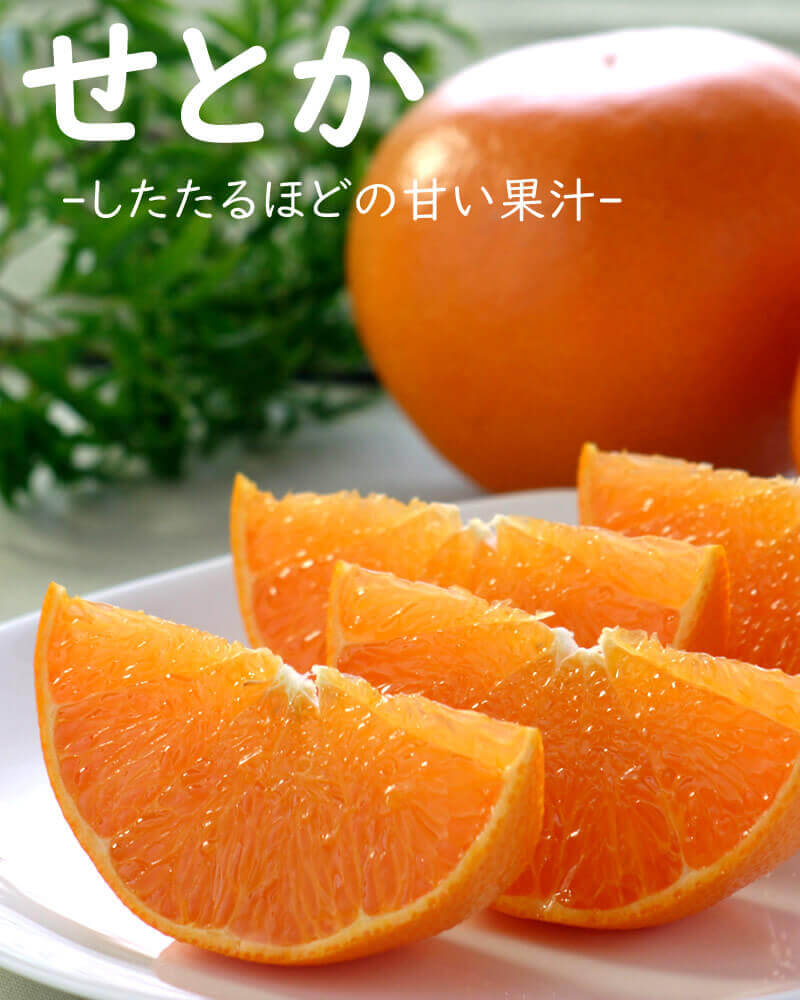 温暖な気候の下で栽培された、高知県産温室せとか