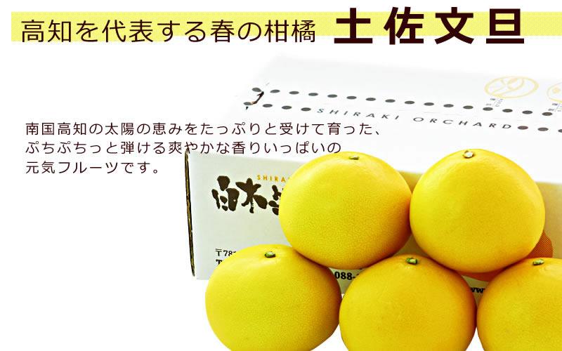 高知を代表する春の柑橘・土佐文旦は南国高知の太陽の恵みをたっぷりと受けて育った、ぷちぷちっと弾ける爽やかな香りいっぱいのフルーツです