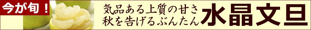 秋の味覚【水晶文旦】